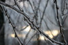 Icebranches